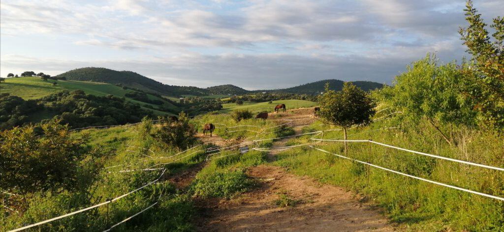 Andalucia a Caballo con Al-Natoura