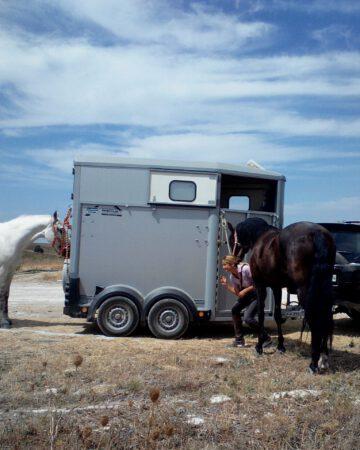 Tráe tu caballo